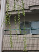 080327futunoyanagi