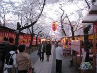 080403yinghua
