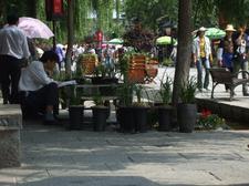 Yunnan20080152