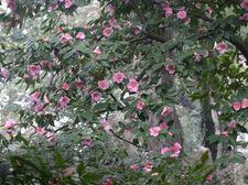 20090228suzhoulanhuazhan004