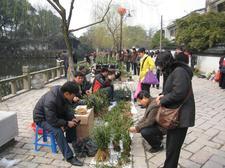 20090228suzhoulanhuazhan010