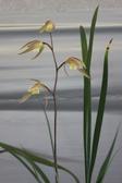 20091212tsu101
