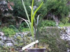 20101103hangzhouhanlanb