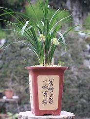 20110326laoshiyuan01