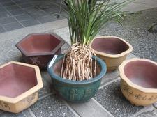 20110402wenzhousu