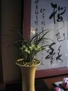 20110415jiatinglanhuazhan01
