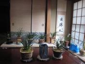 20110415jiatinglanhuazhan02