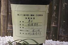 20120218ningbojinxiangfeicui02