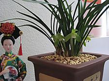 20120324jiashidelanhua