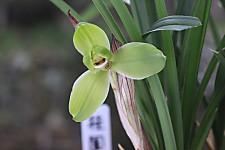 20120325guiyuanmei01