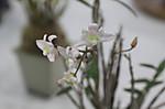 20120512shihuzhan09