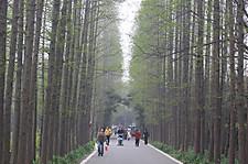 20100411shanghaizhiwuyuan02