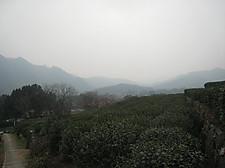 20151227longjing01